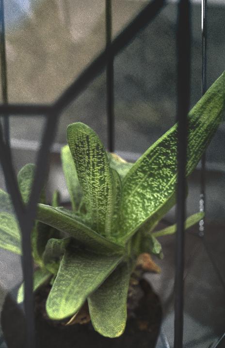 cactus-01_full